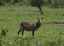 buck (16k image)