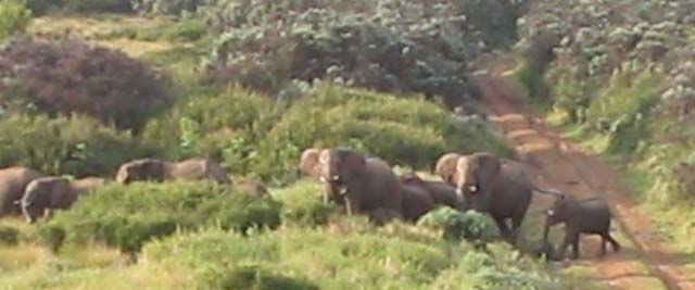 elephants (22k image)