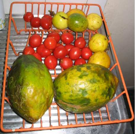 fruit (29k image)