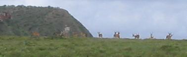 gazel (5k image)
