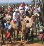 how to start a camel race