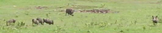 warthogs (20k image)