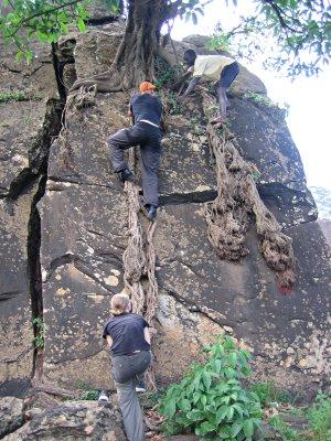 Mark climbing tree roots